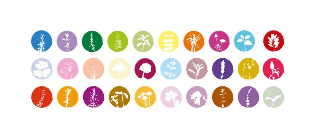 Iconografia Símbolos Agricultura biológica cantinhodasaromaticas